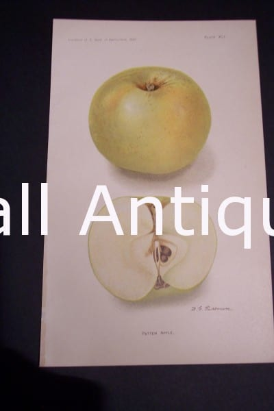 Fruit USDA Patten Apple