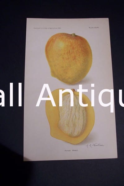 Fruit USDA Peters Mango