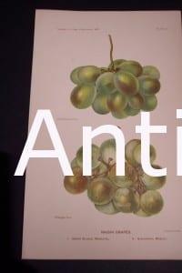Fruit USDA Raisin Grapes
