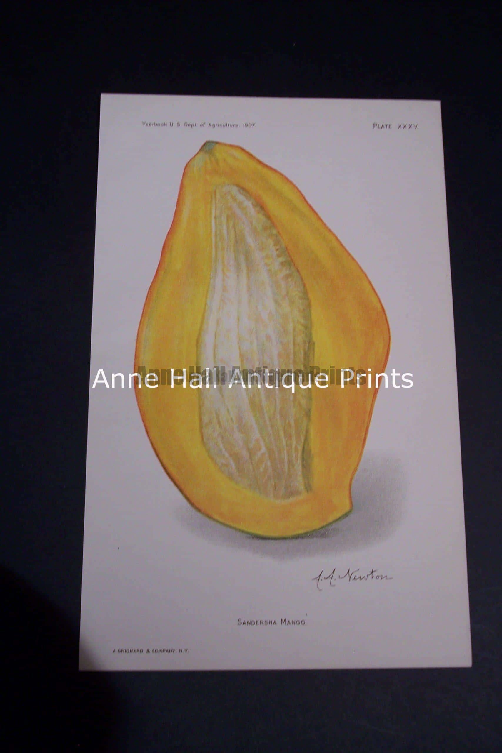 Fruit USDA Sandersha Mango