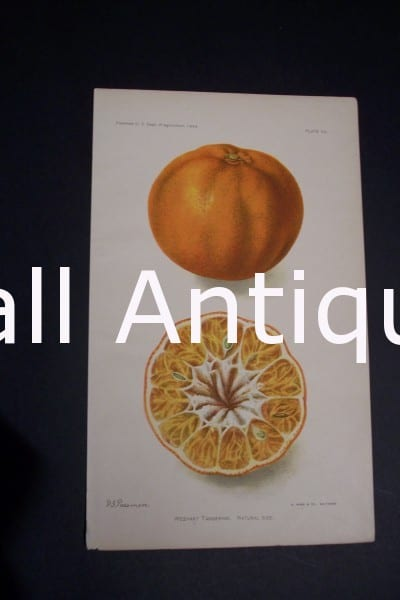 Fruit USDA Weshart Tangerine