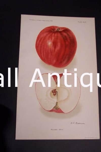 Fruit USDA Williams Apple
