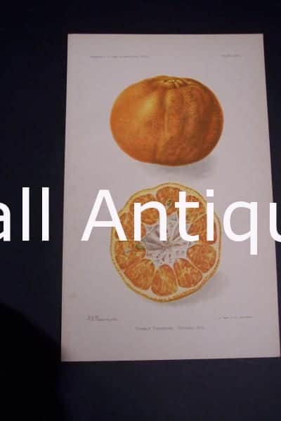 Fruit USDA Trimble Tangerine
