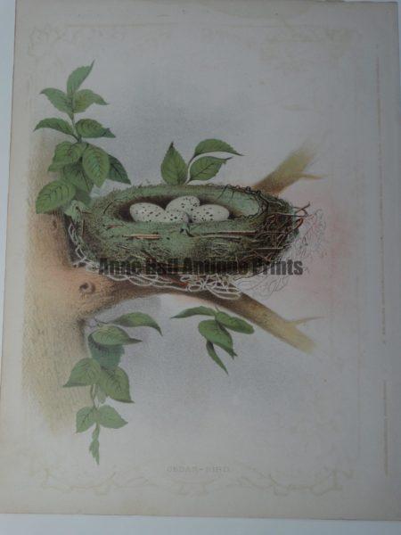 Gentry Cedar Bird Nest