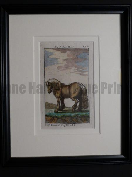 charming 200 year old engraving of pony , black frame.