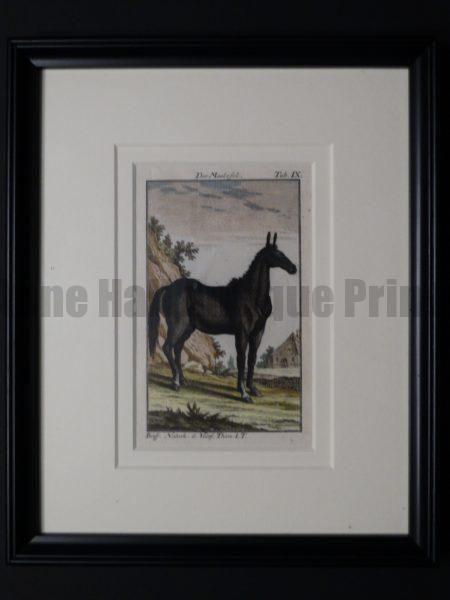 200 year old engraving of a mule, framed.