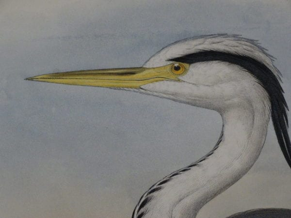 great antique prints of water birds by famous artists