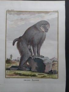 Grand Mehul Monkey