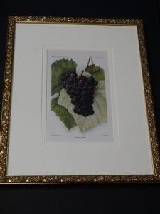 framed art grapes