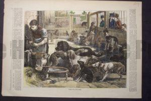Home for Lost Dogs, January 20, 1872. $60.