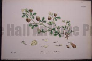 Hop Trefoil, 1863. $25.