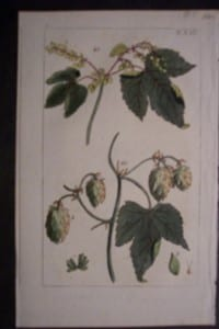 Hops(1), 1817. $50.