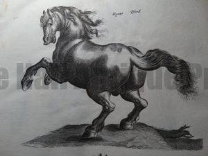 Antique Horse Prints