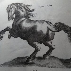 Horses & Equestrian Prints to Buy Now!