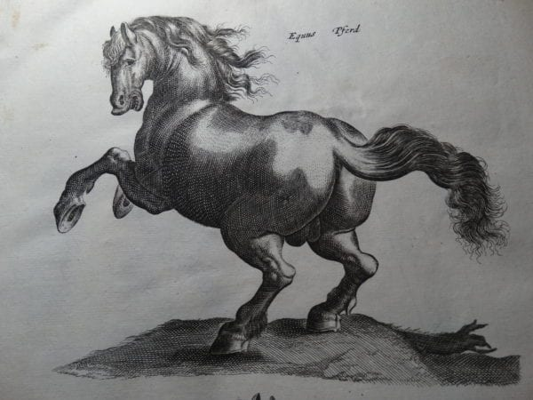 Horses! Antique Lithographs & Engravings Buy Online