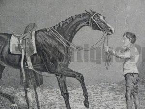 Horses Antique engravings lithographs. over 100 years old