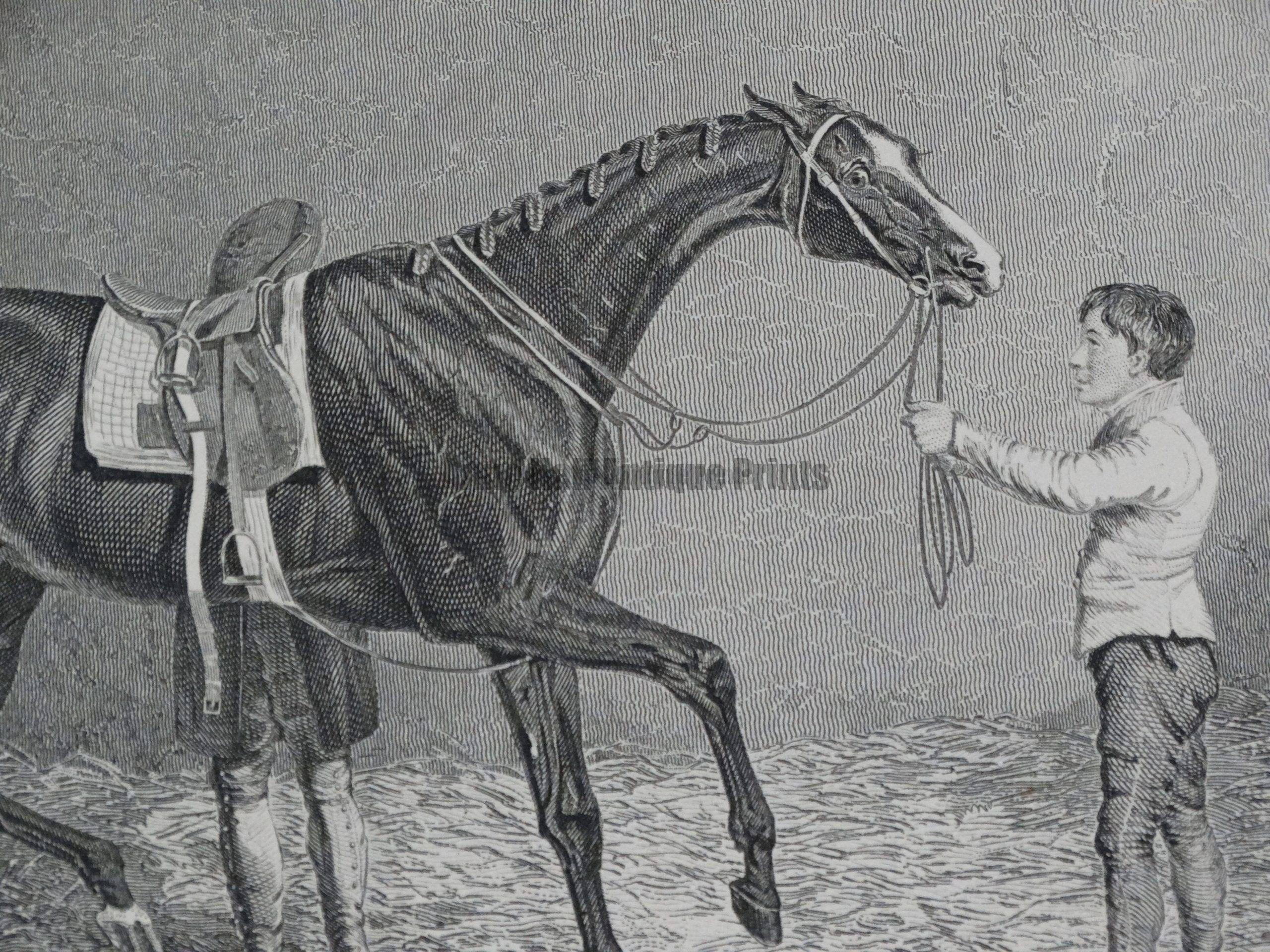 Horses Antique Engravings and Lithographs