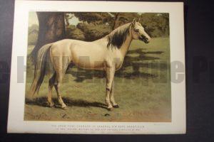 Arab Pony Charger