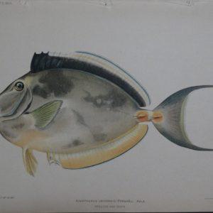 Kala, 1903. $125.