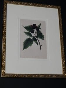 antique lithograph framed berries