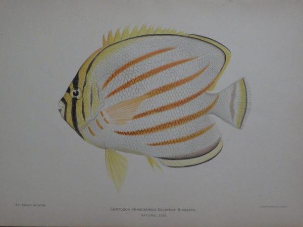 Kikakapu, 1903. $125.