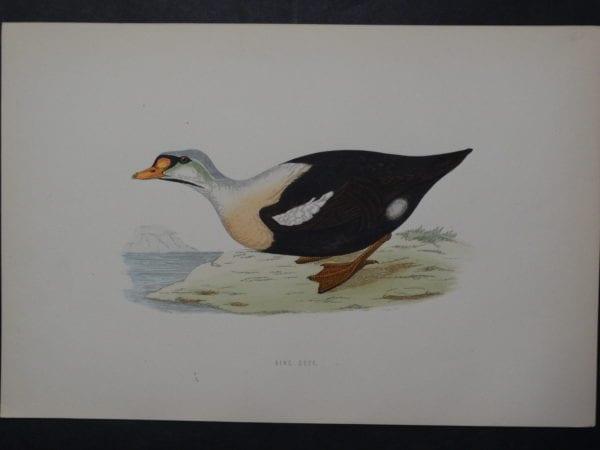 King Duck, 1890. $45.