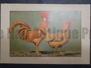 Kramer Poultry Chromolithograph 37