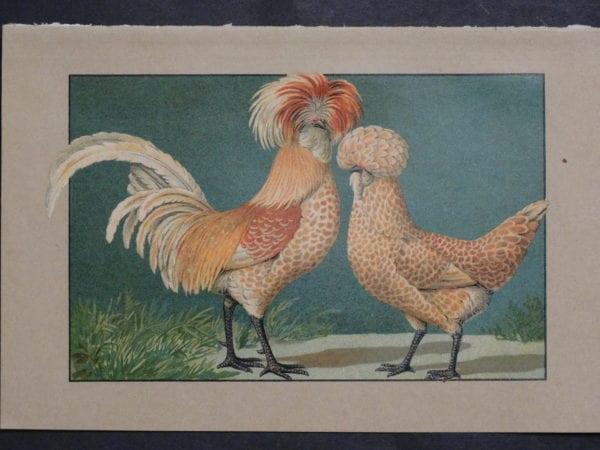 Kramer Poultry Chromolithograph 36