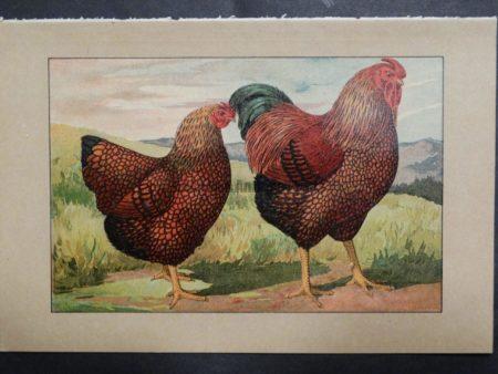 Kramer Poultry Chromolithograph 28