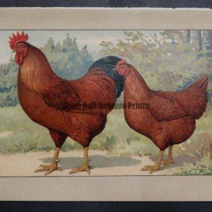Kramer Poultry Chromolithograph 24