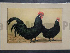 Kramer Poultry Chromolithograph 23