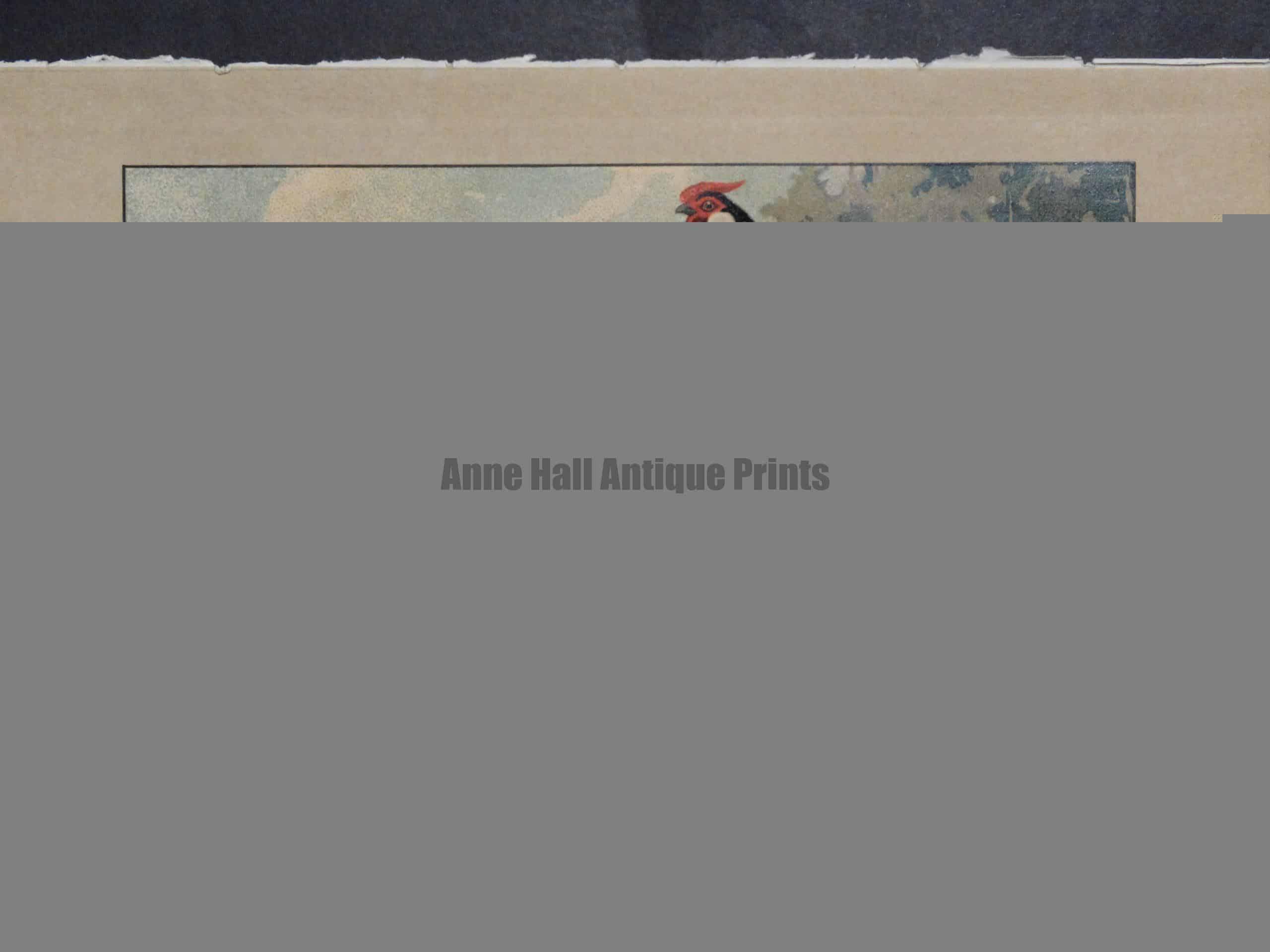 Kramer Poultry Chromolithograph 22