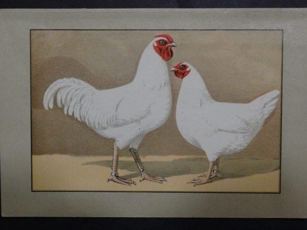 Kramer Poultry Chromolithograph 39