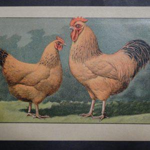 Kramer Poultry Chromolithograph 35