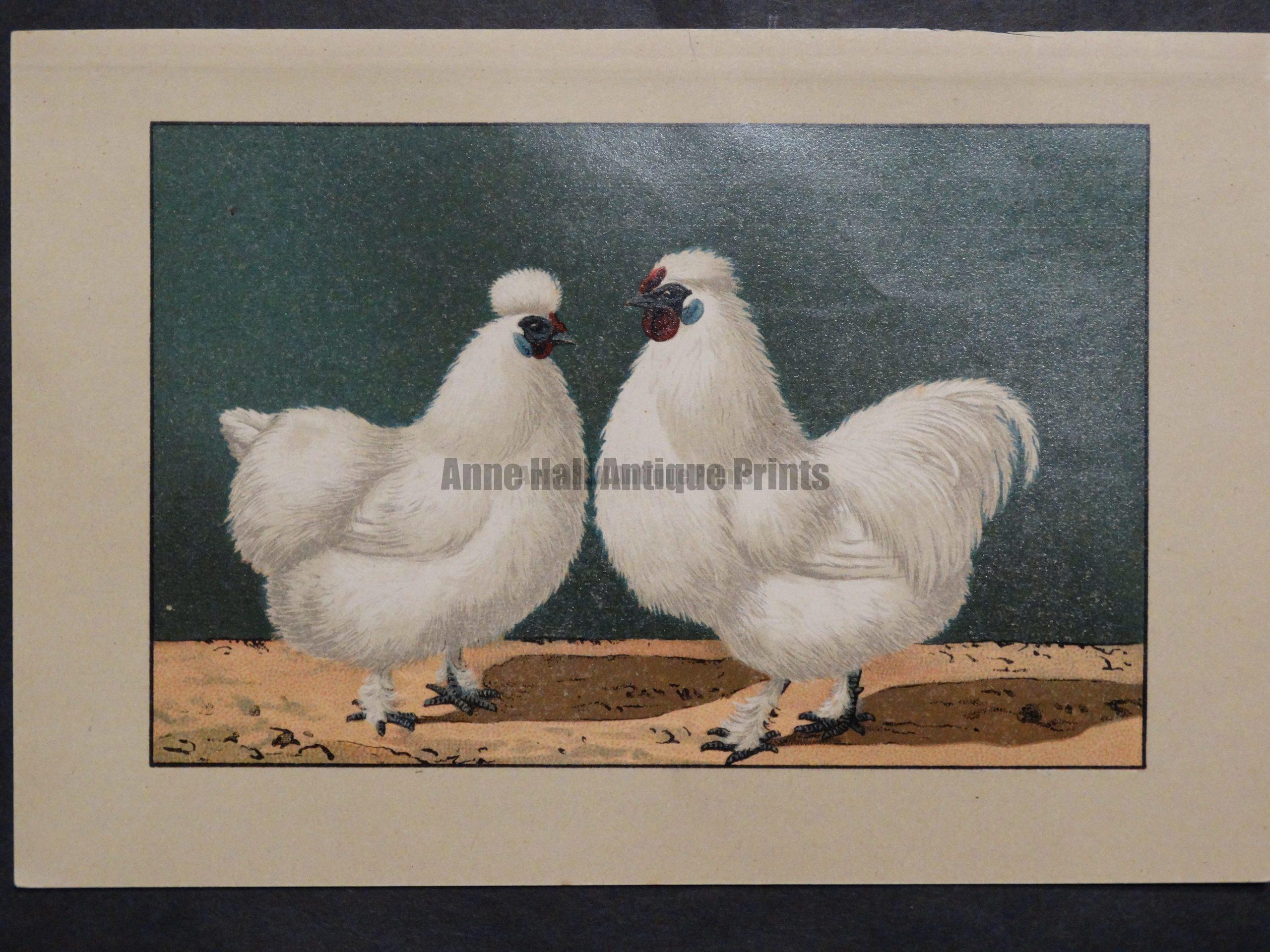 Kramer Poultry Chromolithograph 34
