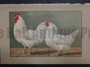 Kramer Poultry Chromolithograph 33