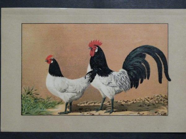 Kramer Poultry Chromolithograph 31