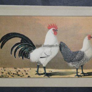 Kramer Poultry Chromolithograph 30
