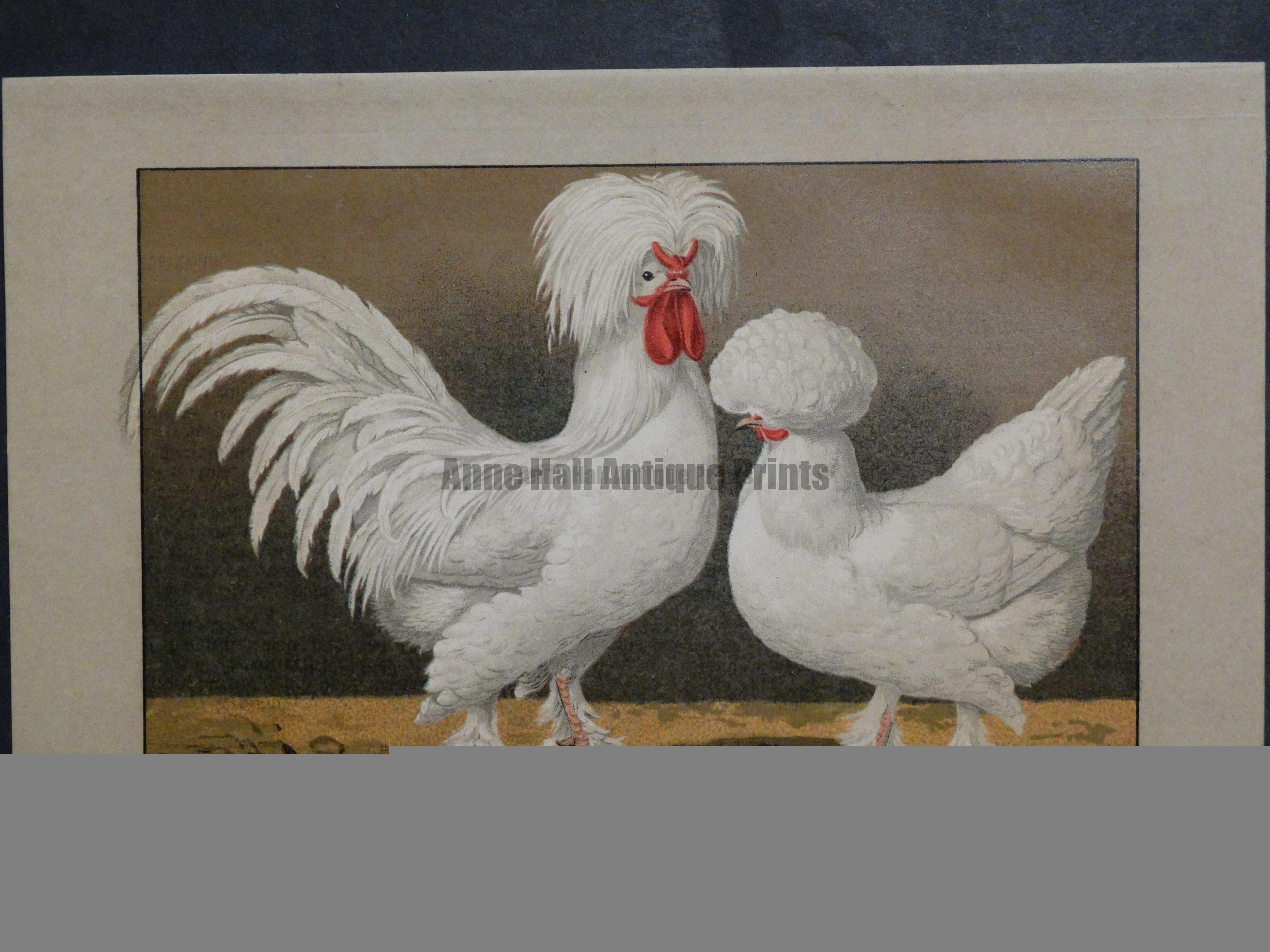 Kramer Poultry Chromolithograph 29