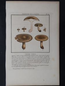 L'Agaric Vineux Mushrooms $85