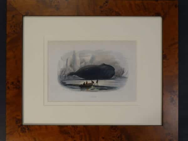 La Baleine. Framed hand-colored lithograph, 1809-1865.