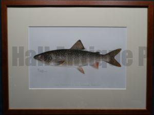Lake Trout by Denton Framed $165. with free US shipping