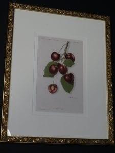 cherries antique litho framed