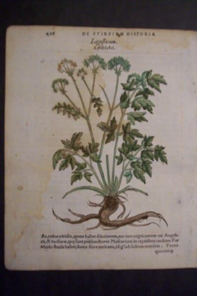Ligufticum, 1560. $60.