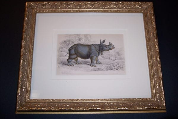 Lizar Indian Rhino Framed