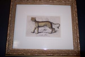 Lizar Lion Tiger Framed