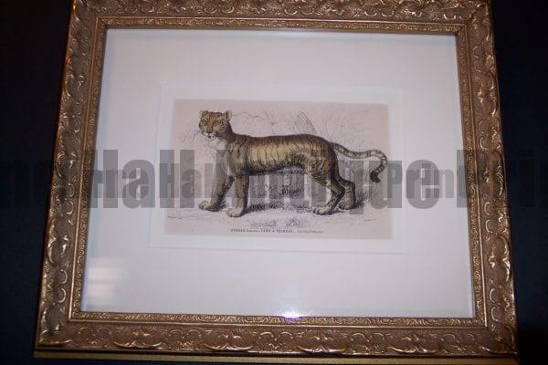 Lizar Lion Tiger Framed