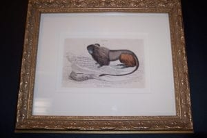 Lizar Monkey Framed