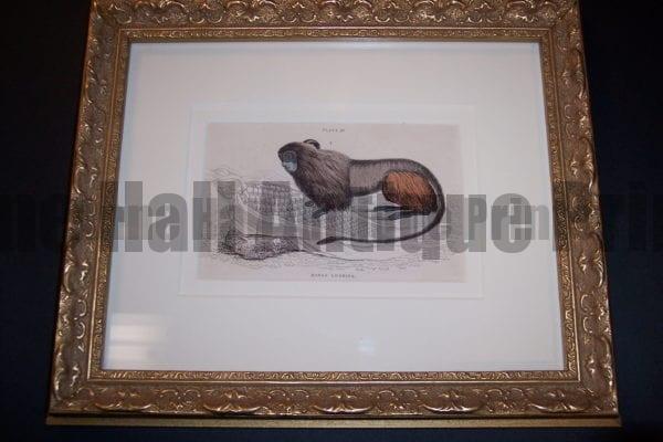 Lizar Monkey Framed