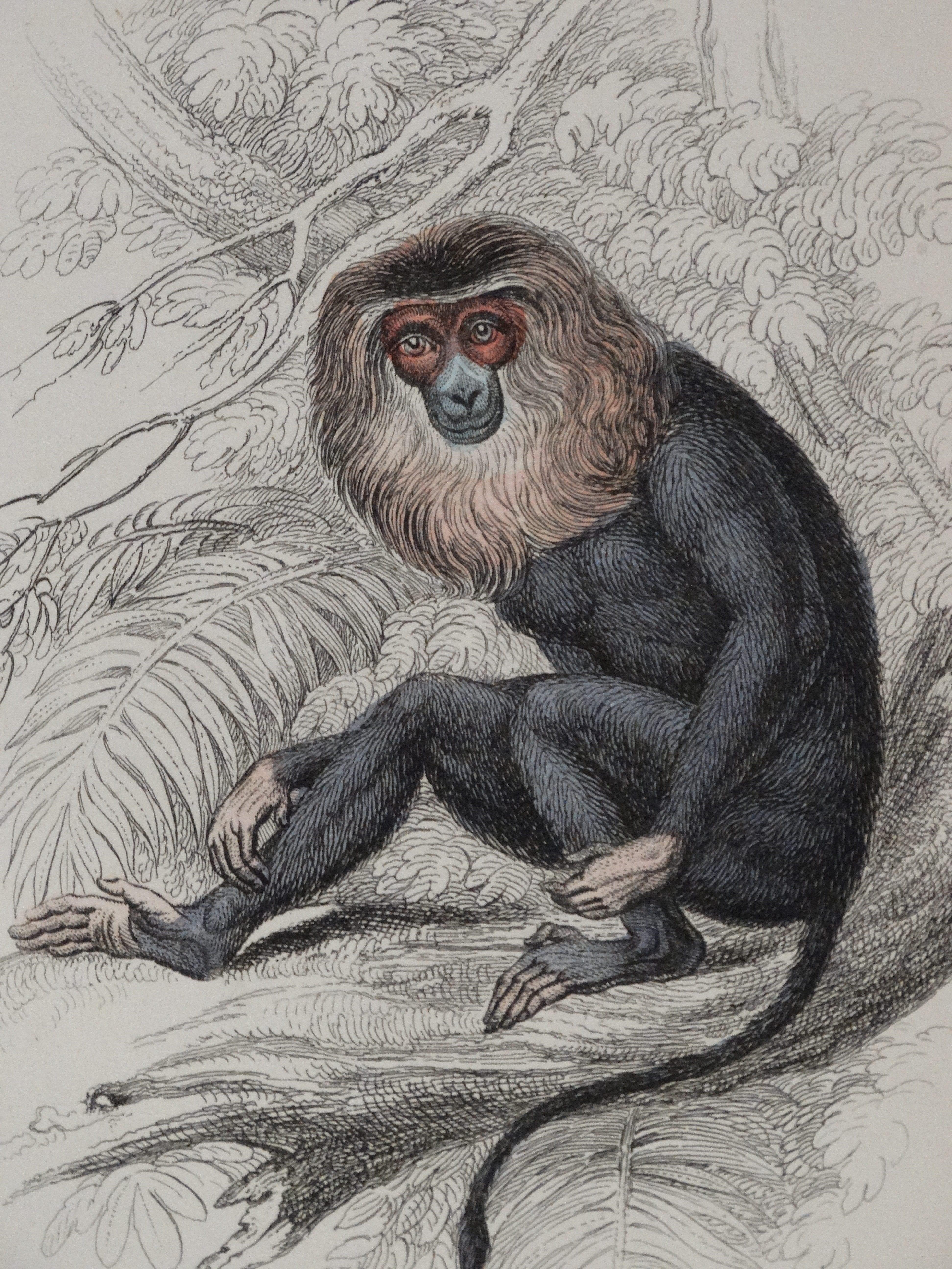 Lizar Monkeys Feature Photo